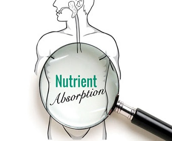 Nutrients Absorption